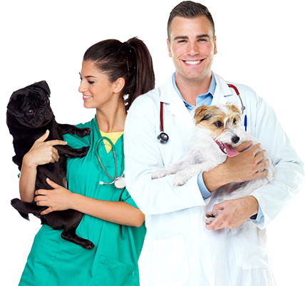 veterinary therapy